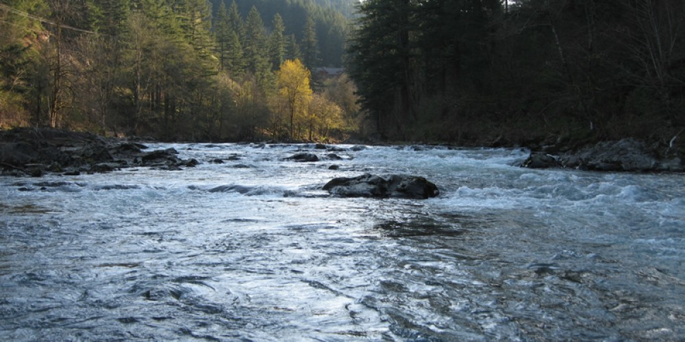 Washougal river sts guide service for Washougal river fishing