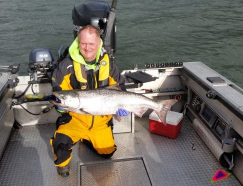 2016 Cowlitz River Spring Chinook Salmon Forecast