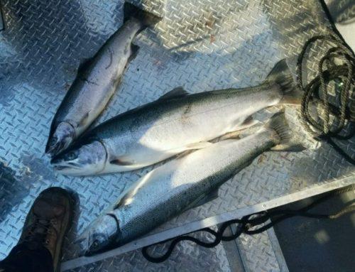 Winter Steelhead Fishing is starting to get good